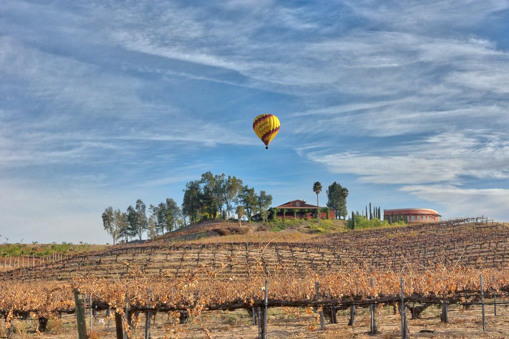 balon nad winnicą